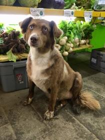 Dog enjoying Bethel Farmers Market
